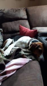OVLPN - Lost dog in North Frontenac