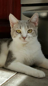 Riley's Legacy Cat Rescue has cats & kittens available to adopt!