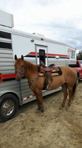 BARREL HORSE  AVAILABLE FOR ON PROPERTY LEASE