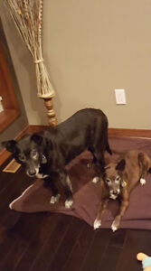 **Adorable Ricki & Lucy are available for adoption****