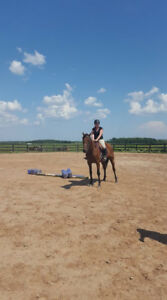 11 Year Old OTTB Mare Available for Part Board