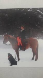 Pretty 5 year old 14.2 h gelding offered for sale.