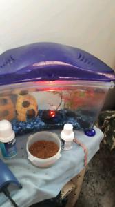 Fish tanks with fish