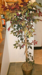 Large fake ficus tree, other smaller fake plants $ 5 - $ 15