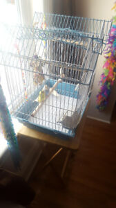 2 4-month old budgies with everything