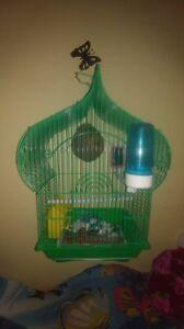 couple de pinson avec cage vert et accessoires pour echange