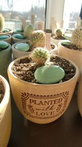 Potted Cacti, $6