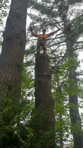 Emondage elagage frêne arbre abattage pruning tree