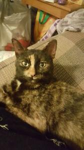 Found - Small Tortoiseshell Kitty Birchmount/Eglinton