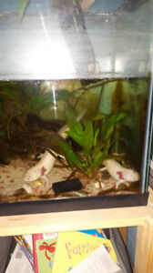 20 gallon axolotl tank