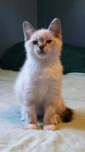 Kitten's looking for their forever home