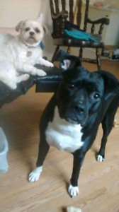 Niagara Dog Rescue - Sadie is Looking for Her New Home!