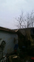 Tree services at discount prices