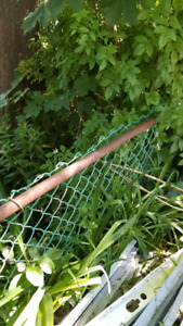 Free chain link fence approx.  100 linear ft