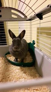 4 year old rabbit