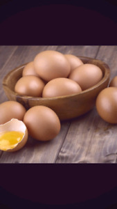 Farm fresh organic pasture-raised eggs