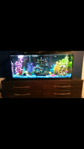 55 gallon freshwater fishtank