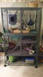 2 ferrets for sale (1 male and 1 female)