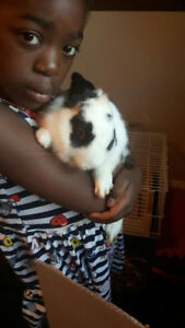 6 MONTH OLD RABBITS FOR SALE