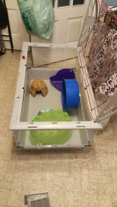Living World Deluxe Rabbit Cage