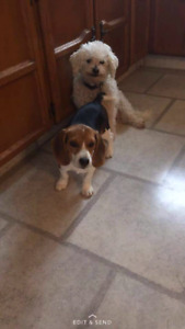 Lost dogs have been found