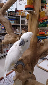 Bird Grooming & Boarding Services