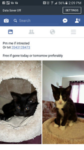 2 3-4 month old kittens FREE