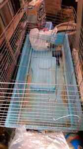 Rabbit cage must got ASAP!  Edmonton Edmonton Area image 1