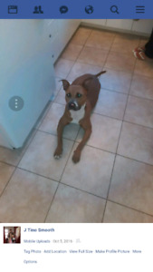 TRYING TO FIND THIS DOG