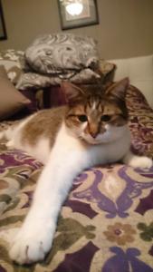 Lost cat Welland