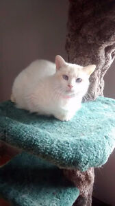 Pearl is Up For Adoption at Pet Save Lively.7056923319