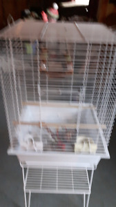 6 month old bird cage