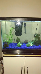 Selling fish and 20gl tank