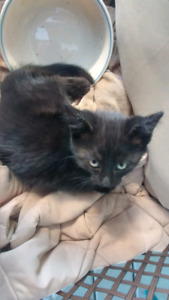 Kittens to give away!