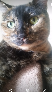 Gorgeous spunky 4 yr old female tortie needs a new home