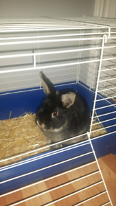 Frmale bunny with cage