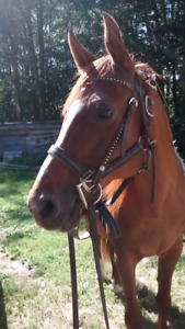 20 year old mare