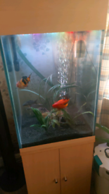Fish tank very thick glass