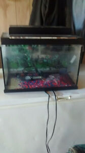 12 gallon fish tank
