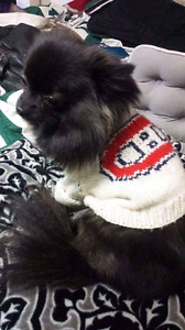 Custom knitted pet sweaters