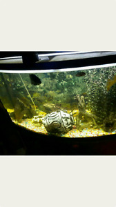 65 gal bofront with fish