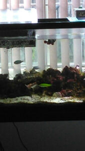 55 gallon Marine Fish Tank for sale $400 everything
