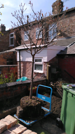 7 foot tree