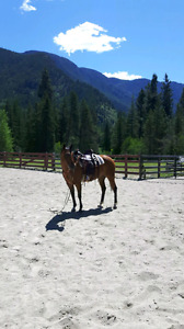 Problem fixing horse training! New spots open!