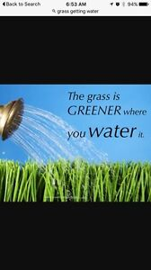 Healthy green grass/landscaping