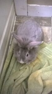 Lionhead babies. and other rabbits