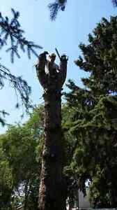 Black Out Tree Removal Edmonton Edmonton Area image 10