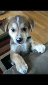 Looking for a dog I gave away a couple years back