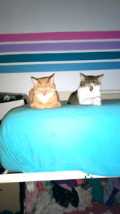 2 cats look for a now loving forever home