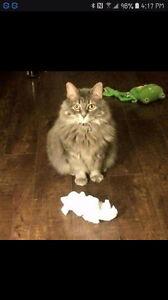 Lost Cat Meeka - Fort Richmond